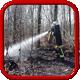 Brandeinsatz > Wald / Flächen
